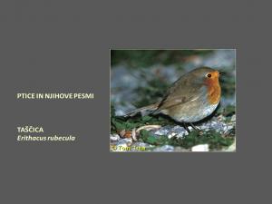 Ptice in njihove pesmi